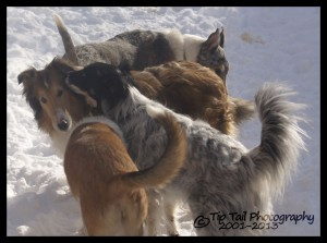 Lilly and the Pack