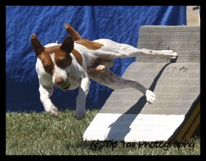 Flyball Box Turn
