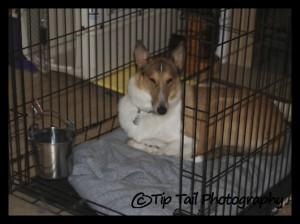 Tatum in a crate