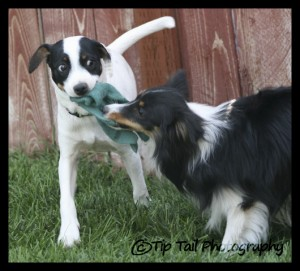 Jet and Layla