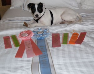 Best in Show Puppy!