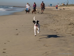 Jet at Dog Beach